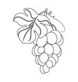 Bunch of yellow grapes icon in outline style vector image vector image