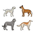 dogs different breeds in color set3 vector image