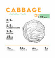 nutrition facts of cabbage vector image vector image