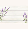 provence template for your design lavender flower vector image