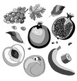 set grapes pomegranate vector image vector image