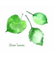 Set of green watercolor leaves for you eco vector image vector image