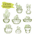 sketches of mexican cactus plant vector image vector image