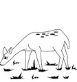 black and white fawn in a field vector image