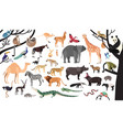 collection exotic animals and birds living in vector image vector image