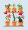 flowers at shelves decorative tree plants grow in vector image vector image