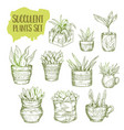 sketch of succulent plant vector image