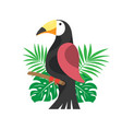 toucan and palm leaves on white background vector image vector image