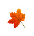 maple leaves and autumnal symbol isolated icon vector image vector image