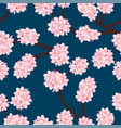 sakura cherry blossom on indigo blue background vector image vector image