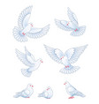set white pigeons vector image
