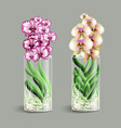 vanda orchid in a glass vase epiphyte tropical vector image vector image