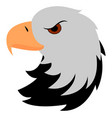 angry falcon on white background vector image vector image