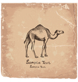 art camel2 vector image vector image
