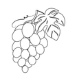 Bunch of grapes icon in outline style isolated on vector image