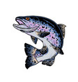 rainbow trout vintage concept vector image vector image