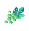 brunch of green grapes with leaf tasty fruit vector image vector image