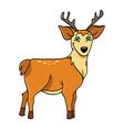Deer buck