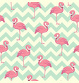tropical flamingo pattern vector image vector image
