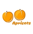 Aroma orange apricot fruits poster vector image vector image
