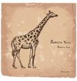 art giraffe2 vector image vector image