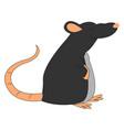 fat black rat on white background vector image