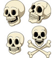 human skull collection set isolated on white backg vector image