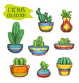 set of isolated cactus in pot cactaceae in plate vector image