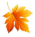 Fall leaf isolated in white vector image vector image