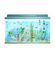 fish swimming among stones and seaweed in aquarium vector image