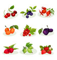 flat set of different kinds of tasty vector image