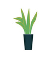 green plant growing in pot isolated icon vector image