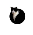 polygonal black cat vector image