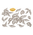 set cocoa sketch hatch vector image