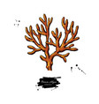 brown algae isolated drawing vector image