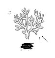 brown algae isolated drawing
