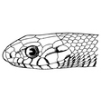 Snake face vector image