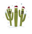 three christmas saguaro cactuses winter in vector image