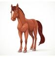 Beautiful brown horse with a star on his forehead vector image vector image