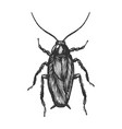 cockroach bug sketch engraving vector image