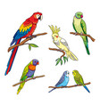 different parrots vector image