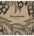 Macadamia branch design template Engraving vector image vector image