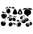 Set of different fresh fruit vector image vector image