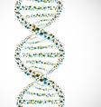 dna strand molecule vector image
