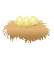eggs nest vector image