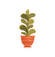 green succulent house plant in ceramic pot vector image vector image