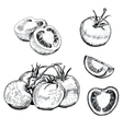 Ink tomatoes sketches set vector image vector image