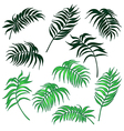 palm leaves set vector image vector image