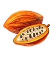 picture of cacao vector image