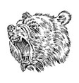portrait of grizzly bear head of a wild animal vector image vector image